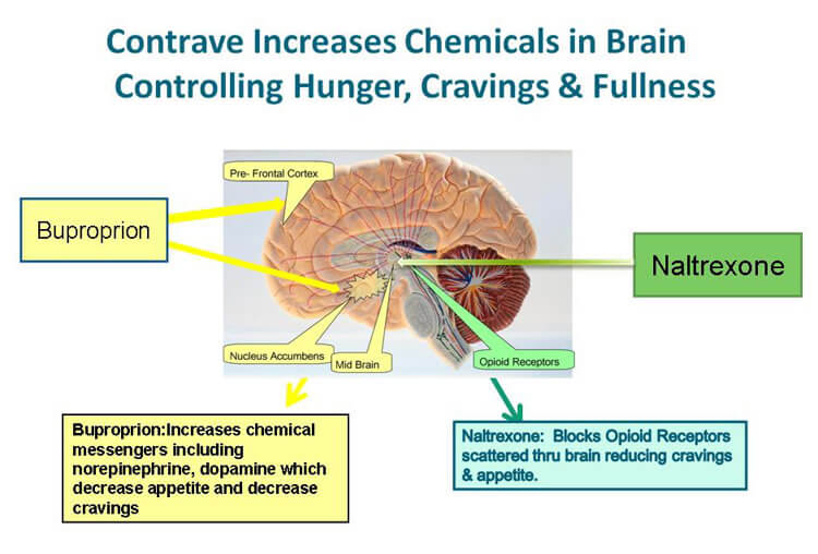 Contrave's Effects on the Brain